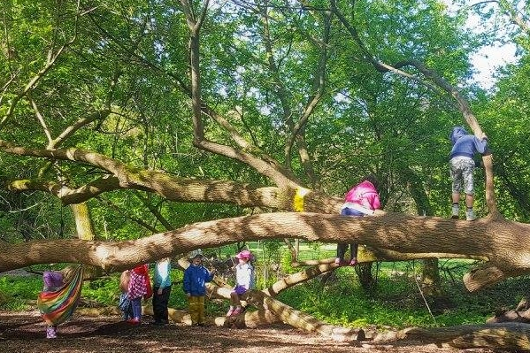 Children playing in tree