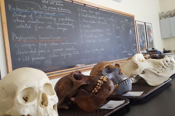 Skulls in Life Sciences Lab